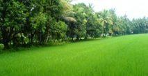 Şehirlerde Kalmayan Yeşillik
