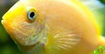 Yeni Başlayanlara Akvaryum ve Balık Bakım Önerileri