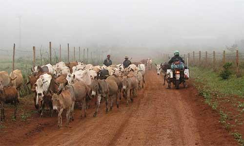 Afrika'daki Tuhaf Trafik Yasaları