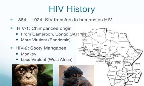 HIV, Şempanzelerden İnsanlara Bulaştı