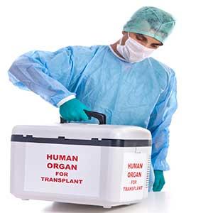 Organ Nakli
