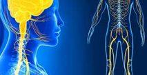 Sağlıklı Bir Sinir Sistemi İçin Nasıl Beslenilmeli?