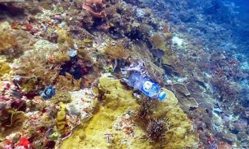 Plastik, Okyanuslardaki Canlıları da Tehdit Etmektedir